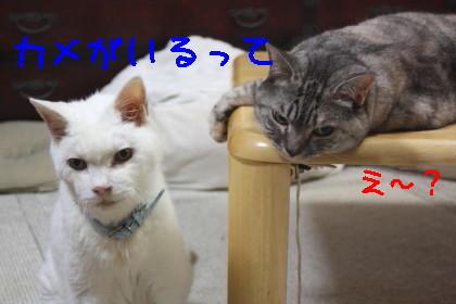 IMG_5726.1_a.jpg