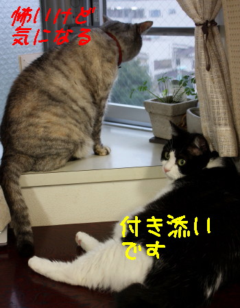 IMG_5780_1.JPG