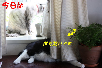 IMG_5810.1_1.jpg