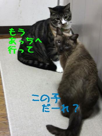 IMG_6218_a.jpg
