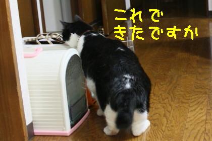 IMG_6264_1.JPG