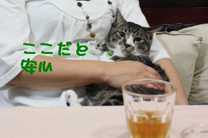 IMG_6328.1_a.jpg