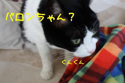 路地猫さんから
