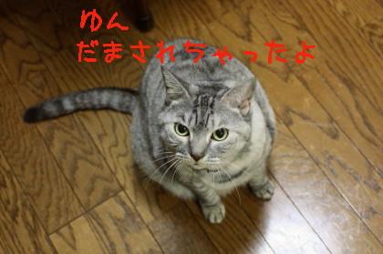 博多弁の猫