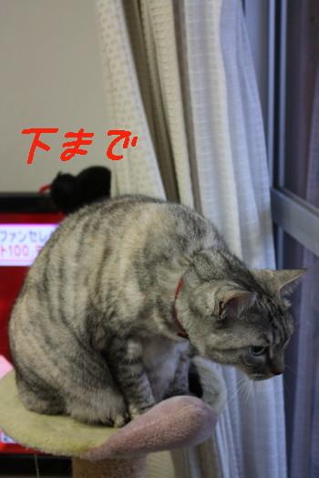 IMG_8987_a.jpg