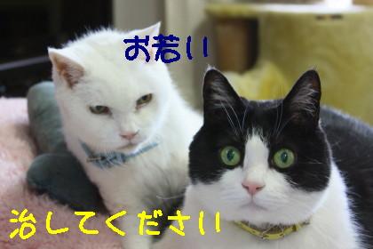 IMG_9662.1_1.jpg