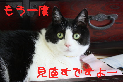 IMG_9687.1_1.jpg